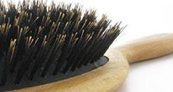 vildsvin hårbørste